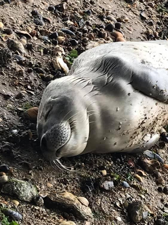 Washed up - the ten day old seal pup was dehydrated but was taken for further care in Kent. Picture: Visit Southend
