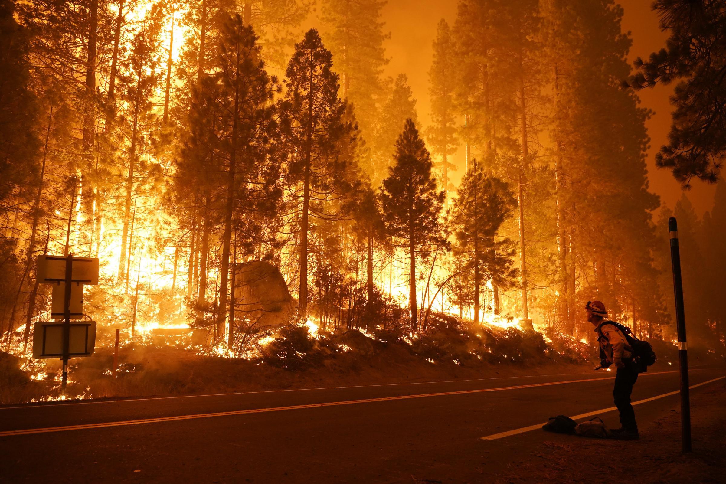 تشهد كاليفورنيا حاليًا موجة قياسية