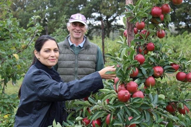 FRUIT PICKING: Priti Patel gets some tips on fruit picking from Ralph Hayter