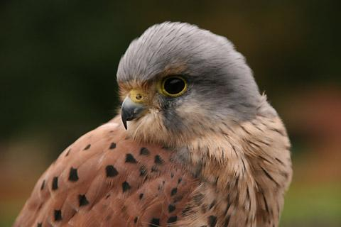 Chelmsford Weekly News: Kestrel box installed at Writtle College