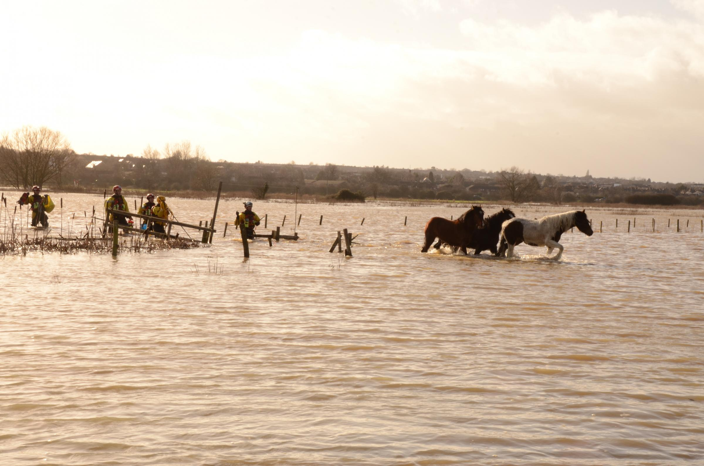 UPDATED: All seven horses saved from flooded land
