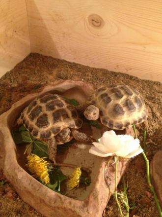 Reunited – tortoises Kyle and Jack
